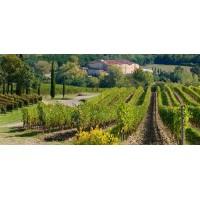 Вино Castelli Del Grevepesa Castelgreve Chianti Classico, 2017(0.75 л)