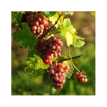 Вино Sant'Orsola Pinot Grigio Veneto (0,75 л)