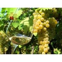 Вино Zenato Soave Classico (0,75 л)