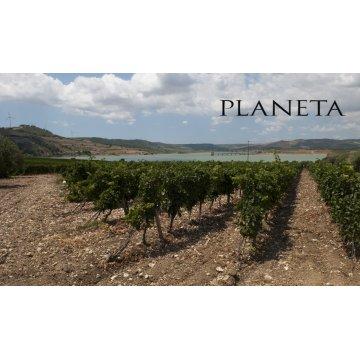 Вино Planeta Syrah Maroccoli, 2009 (3,0 л)