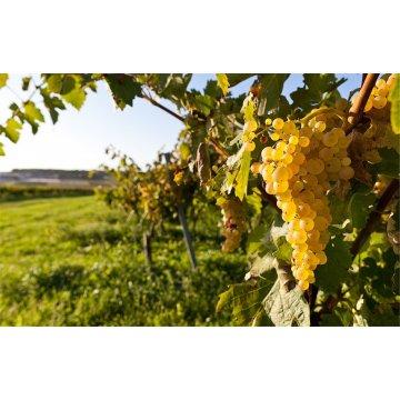 Вино Le Rovole Vino Bianco (5 л)