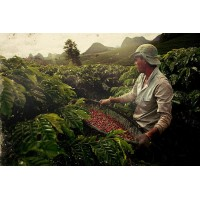 Кофе Brazil Premium Arabica, раствора (100 г)