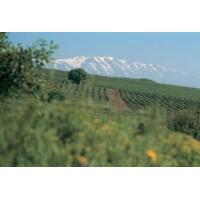 Вино Golan Heights Winery White Riesling Gamla (0,75 л)