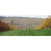 Игристое вино Chiarli Trebbiano del Rubicone Frizzantino secco (0,75 л)