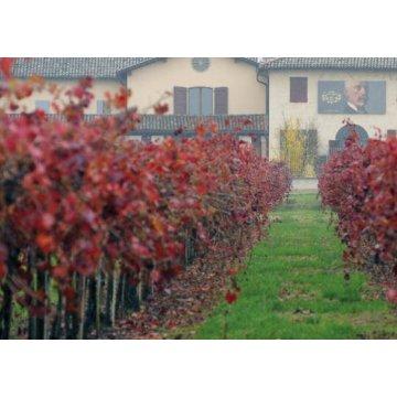 Игристое вино Chiarli Lambrusco dell 'Emilia Rosato (0,75 л)