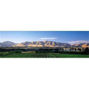 Вино Saint Clair Riesling Marlborough (0,75 л)