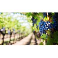 Вино Cape Zebra Pinotage, 2015 (0,75 л)